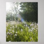 Wildflowers in field poster