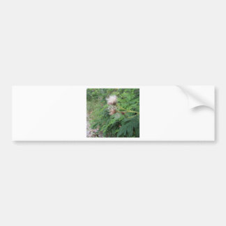 Wildflowers in the woods bumper sticker