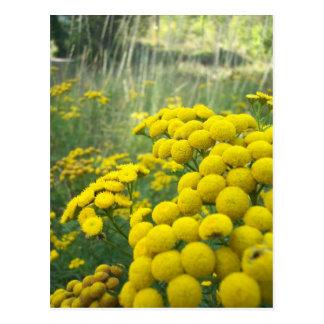 Wildflowers of Montana Postcard