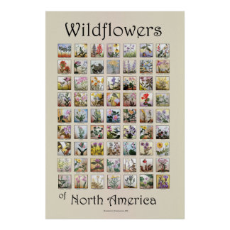 Wildflowers of North America Poster