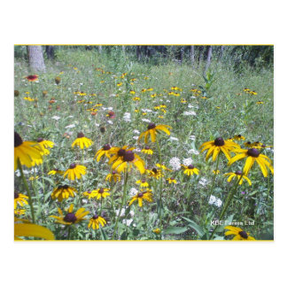 Wildflowers On The Prairie  - Postcard