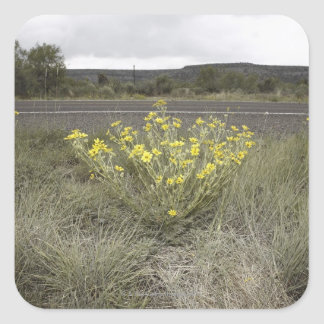 Wildflowers on the Side of the Road, Highway 90, Square Sticker