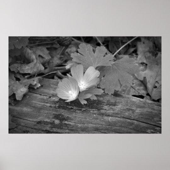 Wildflowers On Wood Print
