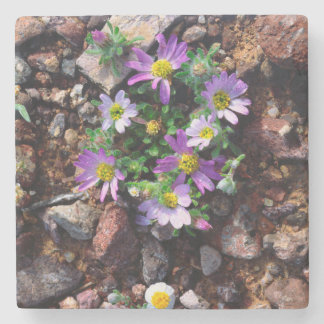 Wildflowers Stone Coaster