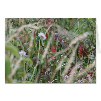 Wildflowers, Surrey Hills Greeting Card