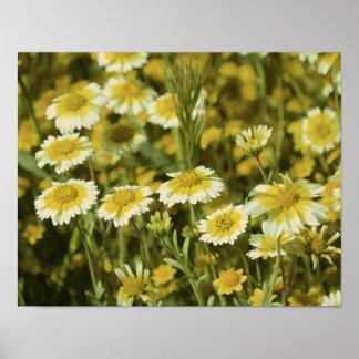 Wildflowers Yellow White Poster