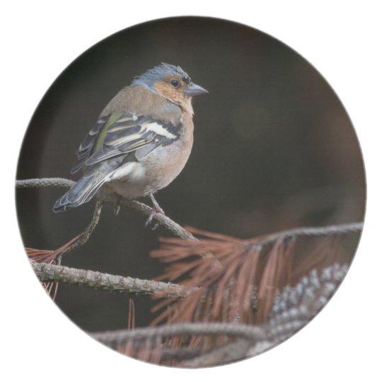 Wildlife bird photograph plate