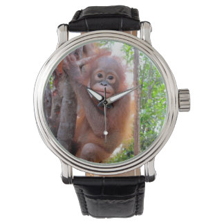 Wildlife Charity Baby Orangutan Watch