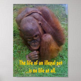 Wildlife Illegal Pet Trade Print