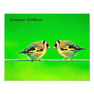 Wildlife images for photo paper