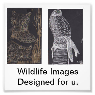 Wildlife Images Photo Print