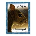Wildlife Mississippi Grey Squirrel Postcard