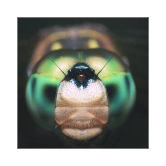 Wildlife Nature Garden Dragonfly Big Blue Eyes Stretched Canvas Print