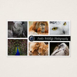 Wildlife Photography Photographer