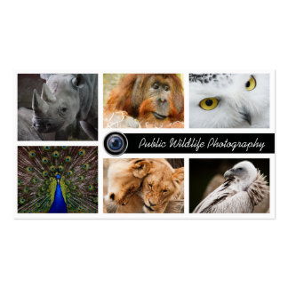 Wildlife Photography Photographer Pack Of Standard Business Cards