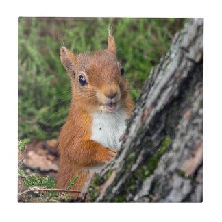 wildlife Red Squirrel Tile