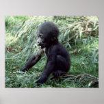 Wildlife Set - Baby Gorilla Close-up Poster