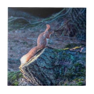 wildlife  Squirrel Tile