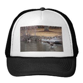 Wildlife Themed Cap