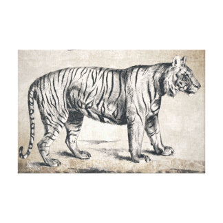 Wildlife Tiger Black and White Hand Drawing Canvas Print