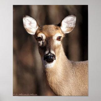 Wildlife Whitetail Deer Doe Portrait Poster