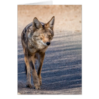 Wiley Coyote Card