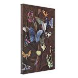 Wilhelm von Kaulbach - Butterflies Gallery Wrap Canvas