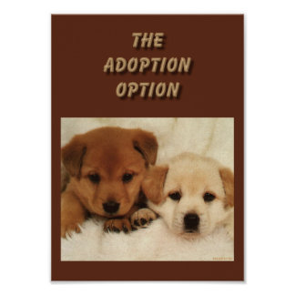 Will adoption be your first option?? poster