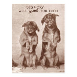 Will Beg & Cry for Food Postcards