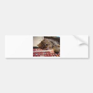 Will work for a catnip bumper sticker