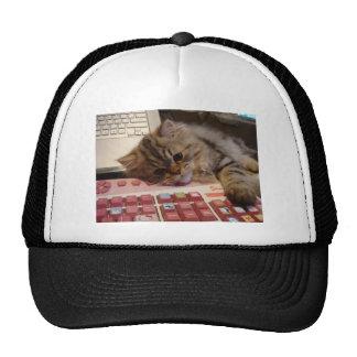 Will work for a catnip trucker hat