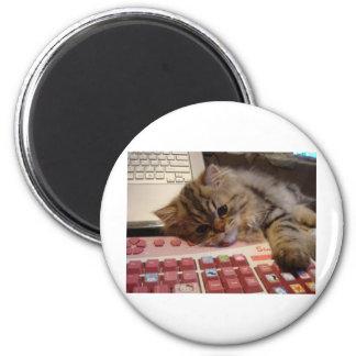 Will work for a catnip 6 cm round magnet
