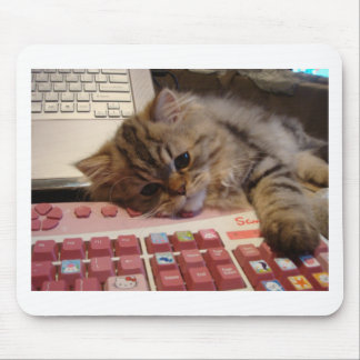 Will work for a catnip mouse pad