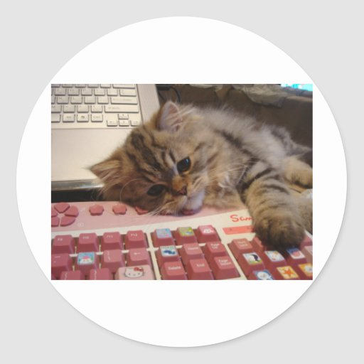 Will work for a catnip stickers