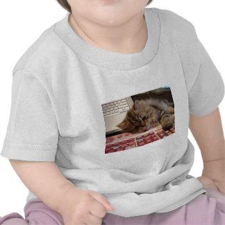 Will work for a catnip t-shirt