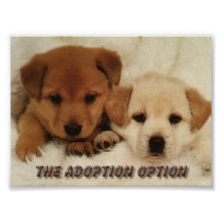 Will you wait to adopt an animal? poster