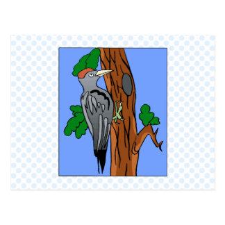 Willford Woodpecker Postcard