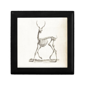 William Cheselden Deer Skeleton Small Square Gift Box