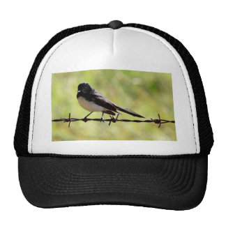 WILLIE  WAGTAIL RURAL QUEENSLAND AUSTRALIA CAP
