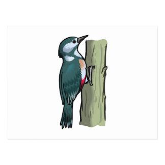 Willma Woodpecker Postcard