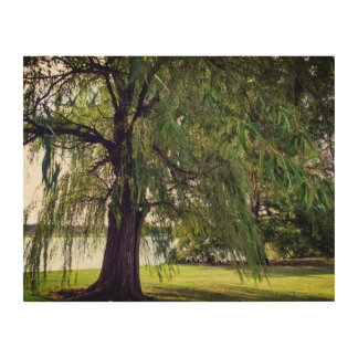 Willow by the Lake Wood Wall Art