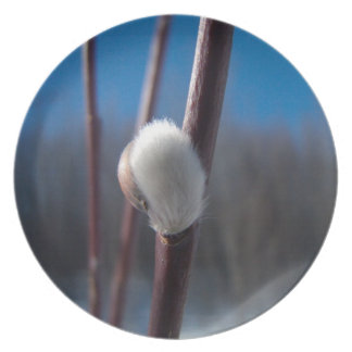 Willow Catkin Close-Up; No Text Dinner Plate