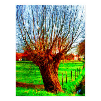 willow tree in traditional Flemish landscape Postcard