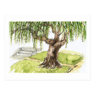 Willow Tree Postcards