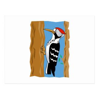 Wilmer Woodpecker Postcard