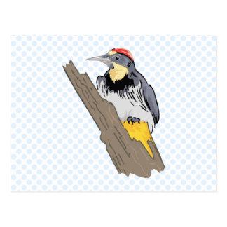 Wilson Woodpecker Post Cards