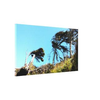 Wind Swept Coastal Trees Stretched Canvas Print