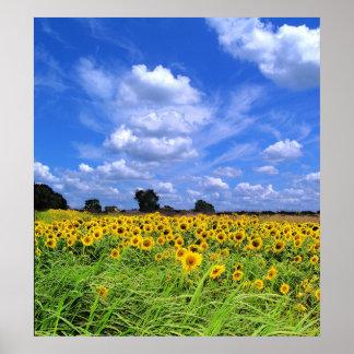 Wind Swept Sunflowers PRINT