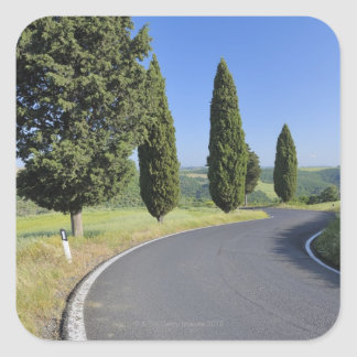Winding Road Lined with Cypress Trees, Val Square Sticker