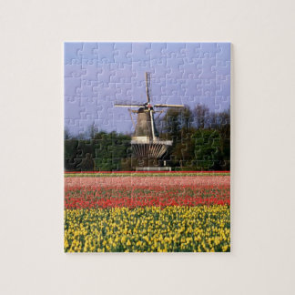 Windmill in the bulb fields jigsaw puzzle